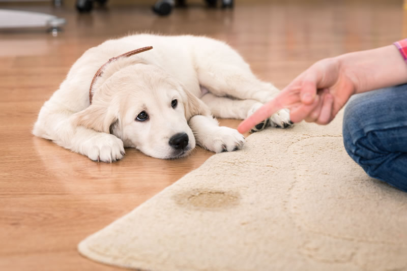 Residential Carpet Cleaning Omaha